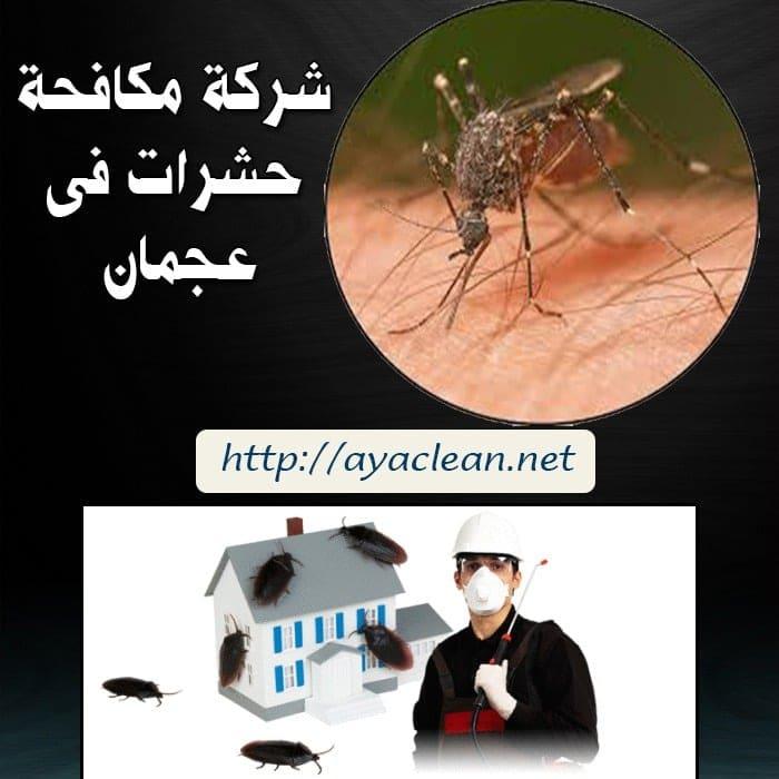 شركة مكافحة الحشرات بعجمان