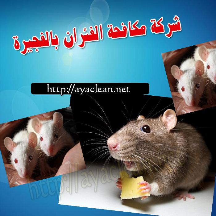 شركة مكافحة الفئران بالفجيرة