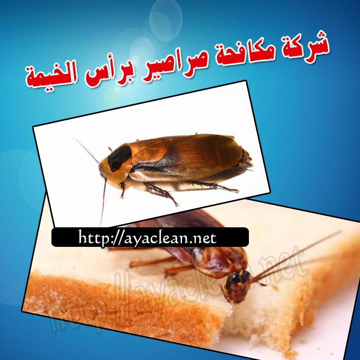 شركة مكافحة صراصير براس الخيمة 0501816457